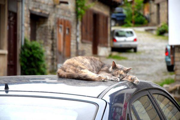 Eine Katze schläft auf einem Autodach
