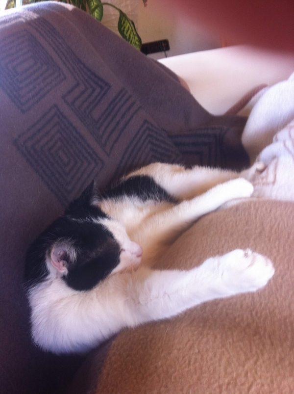 Eine Katze schläft eingeklemmt auf dem Sofa