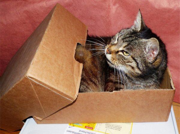 Eine Katze schläft im Karton